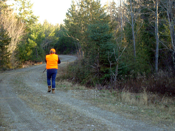 Taylor, hunting ruffed grouse (partridge)