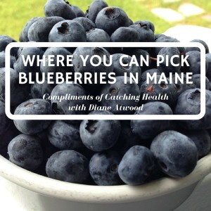 Blueberry featured image for BDN