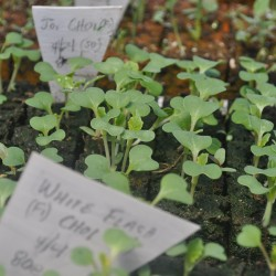 Seeding blocks 005