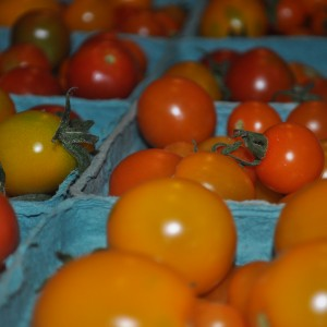 First Cherry Tomatoes 009
