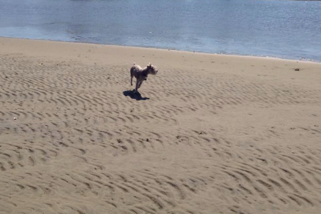 and a happy birthday run on the sandbar!