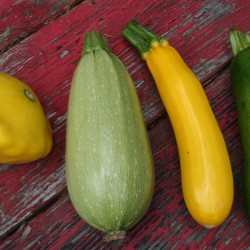 Varieties of summer squash include (left to right) patti pan, Magda, yellow zucchini, and green zucchini.