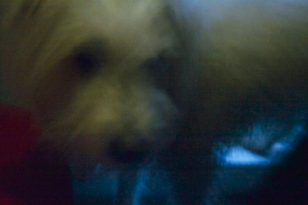 A picture of my dog, Hook. I took this photo, handheld, at ISO6400 for one second using a pinhole instead of a lens on the end of my digital camera.