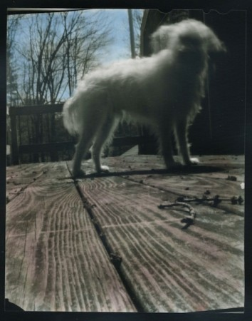 A hand colored 4x5 contact print of my dog hook I made with a pinhole camera I made with a Christmas cookie tin and a soda can.