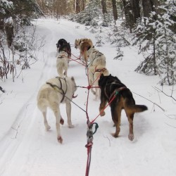 Mushers to run for fun in Ellsworth