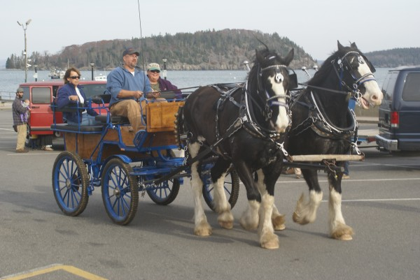 Bar Harbor is considering an ordinance that would allow horse-drawn carriages to operate as taxis this summer.