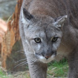 Maine Wildlife Park in Gray sees increase in visitors