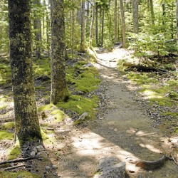 In Acadia National Park, the Asticou Trail winds through a pleasant forest.