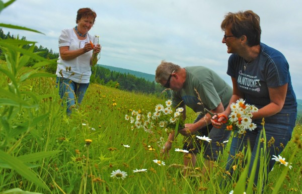 Members of the Orust Dancers of Sweden are in Aroostook County this weekend to take part in the annual Midsummer Festival in New Sweden. On Friday, June 22, 2012, several members of the group joined residents as they gathered wildflowers for use around the community in various traditional activities. Collecting flowers in a field above Madawaska Lake were Orust dancers Mona Bodin (left), Janne Anderson and Solveig Tillander.