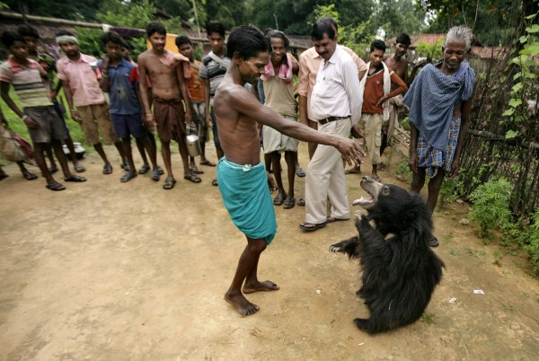 In this picture taken Thursday, Aug. 16, 2012, Ghasiram Kisan (center) gestures as villagers gather to see Buddu, a one-and-a-half-year-old sloth bear at Kisan family's home in Lakhapada, 220 miles from Bhubaneswar, India. The wild bear, which was rescued from the family by wildlife officials on Friday, Aug. 17, 2012, wandered into the village while following a herd of goats and had lived with the family ever since.