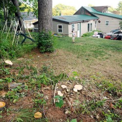 Proposed Bangor tree policy change leaves disputes between neighbors to them