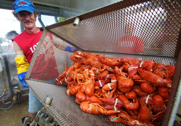 Maine Lobster Festival head lobster cooker Peter Smith unloads a basketful of steamed lobsters on Wednesday, Aug. 1, 2012 in Rockland.