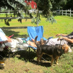 Dick and Barbie Willis take in some well-needed relaxation after Dick's four days in Eastern Maine Medical Center's ICU, after a stroke on a roadless island and a LifeFlight rescue.