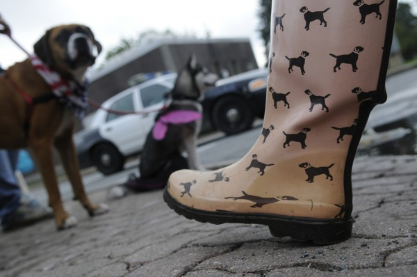 A volunteer's rubber rain boot keeps with the event theme during Bangor Humane Society's 19th annual Paws on Parade event on Bangor's waterfront Saturday, Oct. 6, 2012.