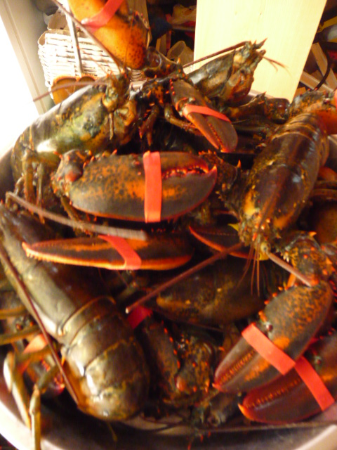 Lobsters at Mother Shuckers, the direct-from-the-sea business Nadine Preston started earlier this year in Roque Bluffs.