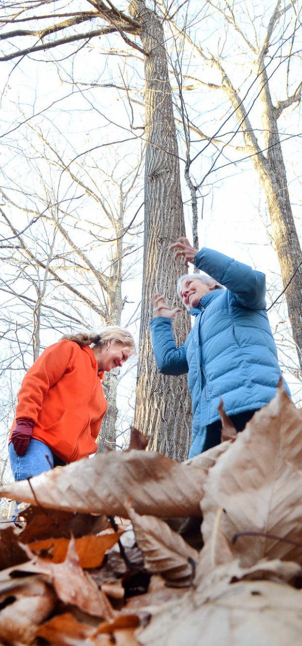 Hebron property owner Ann Siekman, right, gestures after learning last week that the American chestnut tree in the background is unofficially the tallest in Maine and possibly the country. At left is Jean Federico of the Oxford County Soil and Water Conservation District, who was in charge of the statewide big tree contest in which Siekman entered the American chestnut.