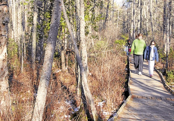 People walk along the Orono Bog Boardwalk on a sunny mid-November afternoon.