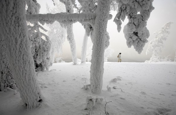 A woman walks past trees covered with heavy hoarfrost and snow on the bank of the Yenisei River, with the air temperature at about minus 14.8 degrees Fahrenheit, outside Russia's Siberian city of Krasnoyarsk, on Dec. 24, 2012. Russia is enduring an abnormally cold winter, the most severe in more than 70 years, according to local media.
