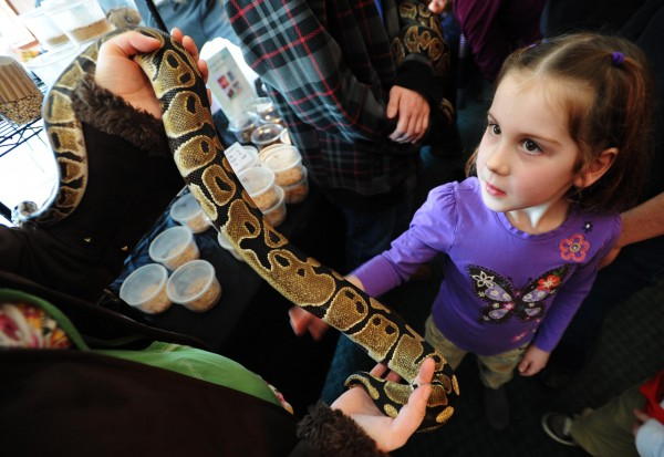 Hannah Baxter, 6, of Bangor strokes a ball python belonging to Kelsey Oakes of Orono during the Bangor Reptile Expo on Feb. 19, 2012.