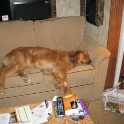 Captain, George and Donna's golden retriever, has adapted pretty well to life on the road, living in their fifth wheel RV.