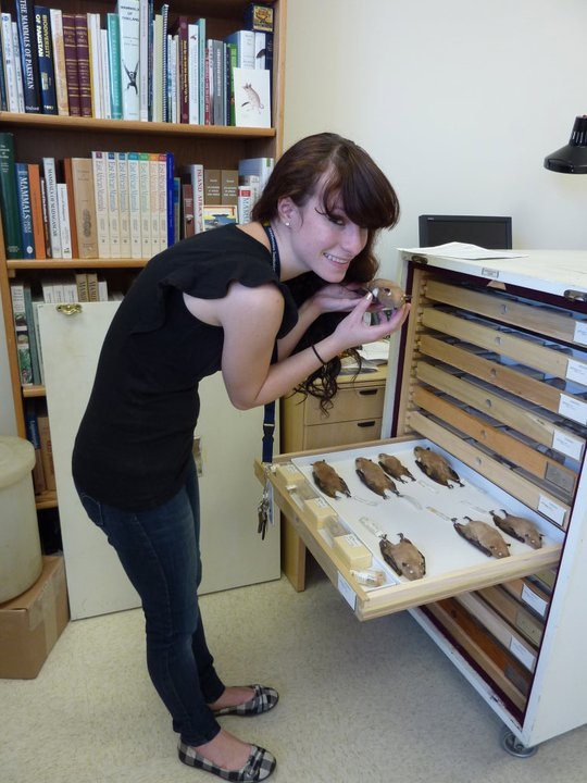 Marissa Altmann, a senior at the College of the Atlantic, holds up a bat specimen at the Smithsonian National Museum of Natural History during the fall of 2012. Atlmann worked as an intern at the museum for nearly a year.