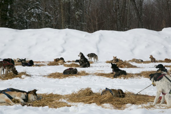 Sled dog teams rest at at the Maibec checkpoint during the CAN-AM Crown 250-mile race on Sunday, March 3, 2013.