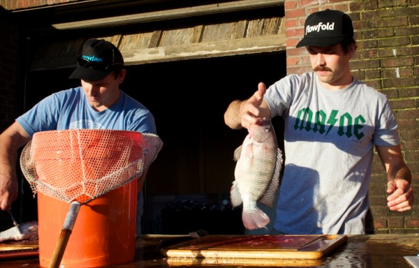 Tyler Gaudet (left) and Jackson Mcleod of Fluid Farms harvest tilapia fish grown in their small facility in Portland in this undated photo. The operation, which grows herbs as well, is moving to a larger venue in North Yarmouth with the help of a Kickstarter campaign.