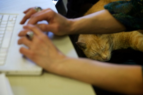 Simba the cat snoozes atop his favorite chair as Tina Soucy teaches a math class Thursday at Westbrook High School. He's been visiting Soucy and the school every day for 13 years.