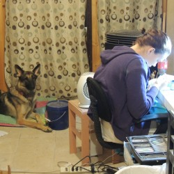 Shawna Mayo hand-builds a piece of pottery in her Wallagrass studio, as her service dog Kane looks on.