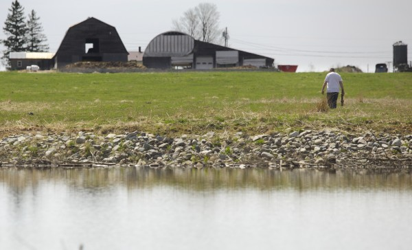 Richard Lary walks back to his dairy farmer in Clinton after looking at his trout pond Monday afternoon. Lary has been told that he must remove his pond that he recently built on his property because it was built near a wetland and is flooding a nearby neighbors road. Lary has been threatened with fines up to $7,000 and $500 a day.