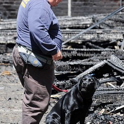 Metro, an accelerant detection dog, awaits a reward from Dan Young at the scene of Friday night's fire as they looked for evidence Saturday.