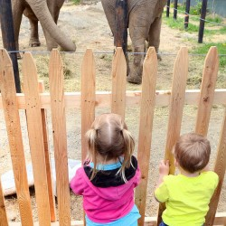 Jordan Ravin of Brooks, left, and Tucker Mank of Hope watch the elephants.