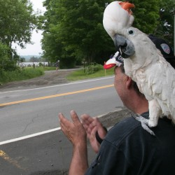 Scott Belanger of Dexter and his cockatoo Sam cheer on runners during the third annual Amy, Coty, Monica Memorial 5K Race/Walk to End Domestic Violence in Dexter on Sunday.