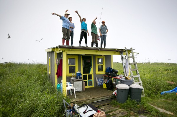 The Project Puffin field biologists wave from the roof of the &quotEgg Rock Hilton&quot to an Audubon colleague who was guiding a tourist boat passing the island.