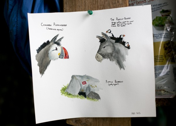 Whimsical watercolors of &quotpuffin-burros&quot painted by intern Aspen Ellis hang inside the cabin on Eastern Egg Rock.