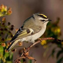 Gift-giving guide for the avid birder
