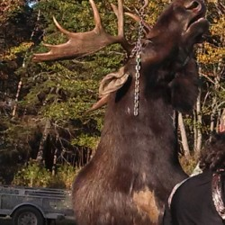 Lucky 18s lead to successful moose hunt