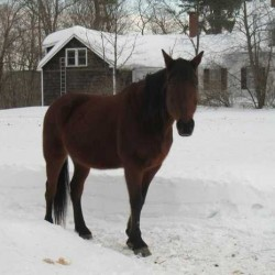 Lisbon Falls horse's fate left to Freeport veterinarian