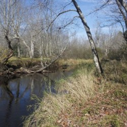 1-minute hike: Gibson Preserve in Searsmont