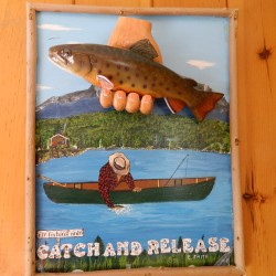 Brook trout: Danger in the bait pail