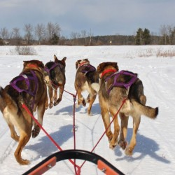 Tales from the Trail: Sled Dog Gals