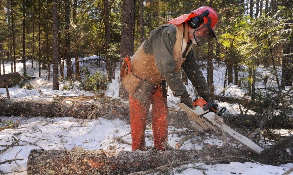 Jim Ostergard, 72, of Appleton cuts the limbs off a pine log while working in a Lincolnville woodlot. Ostergard is a former commercial fishing boat captain who became a certified master logger. He has been using horses for low-impact logging for 10 years.