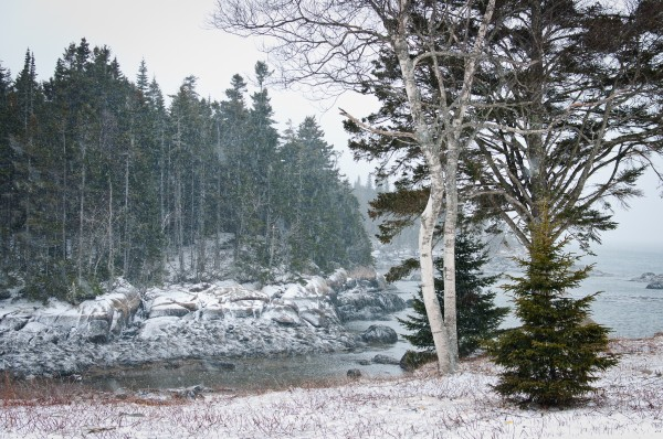 Snow falls in Beals, Maine on Wednesday during the start of a storm could bring several inches of snow to Down East Maine.