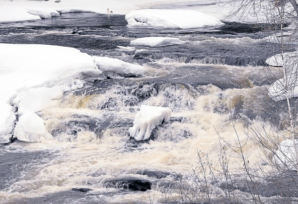 The cold, dark, and fast-flowing Souadabscook Stream roils over the falls near Paper Mill Road on March 28. Ice and snow still cover much of the steam's bank and surface.