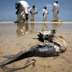 2 years later: What's latest on Gulf oil spill?