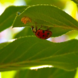 Keeping cucumber beetles at bay should not involve toxic chemicals
