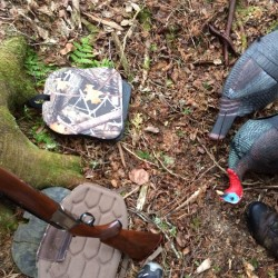 On turkey hunts you may not be alone