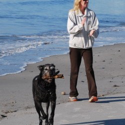 Marilynn Windust, a visitor from Phoenix, Arizona, plays with her dog, Jack, on Pine Point Beach in Scarborough in this October 2013 file photo.
