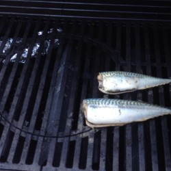 A couple of plump mackerel, after being pickled, are placed on the grill. The tinfoil holds damp wood chips that will provide the smoke.