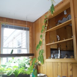 Dan Birt's Millinocket home was getting taken over by cucumbers because of the 92-year-old master gardener's winter growing skills. Birt plans to plant nearly 4,000 onion seeds in the coming days and said he enjoys giving away most of his produce to friends and neighbors.
